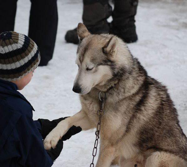 enfant-avec-chien